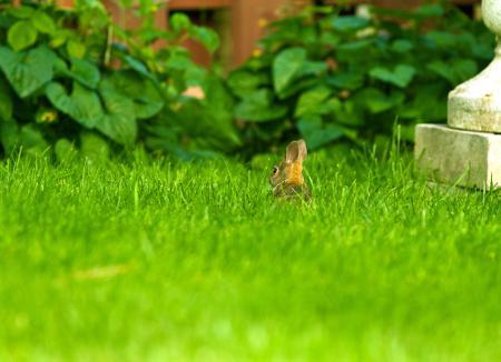 Картинки трава, кролик, лужайка