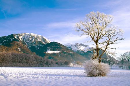 Обои горы, зима, снег, куст