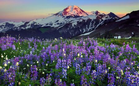 Фото горы, цветы, природа, пейзаж