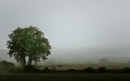 Картинки утро, туман, природа, пейзаж