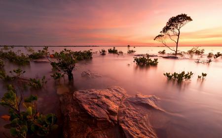 Фото закат, озеро, деревья, пейзаж