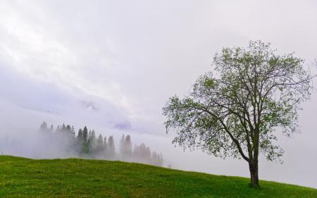 Обои дерево, горы, туман, лето