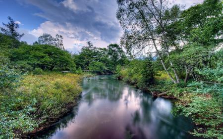 Фото река, лес, лето, пейзаж