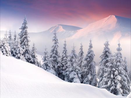 Картинки ёлки, горы, рассвет