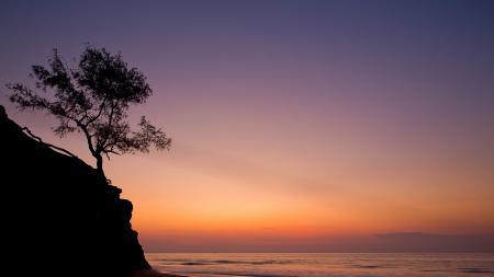 Обои закат, море, дерево, пейзаж