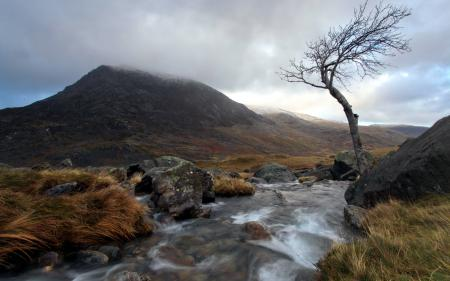 Фотографии река, дерево, горы, пейзаж