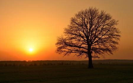 Обои закат, дерево, пейзаж