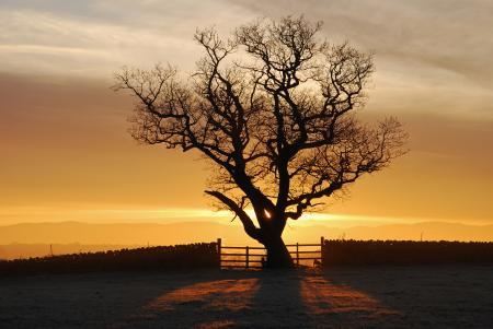 Фотографии Англия, Eden Valley, закат, дерево