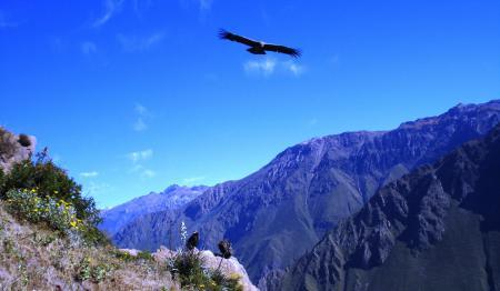 Фото горы, вершины, кондоры
