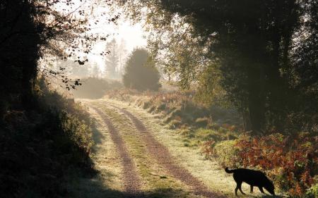Обои утро, дорога, собака, пейзаж