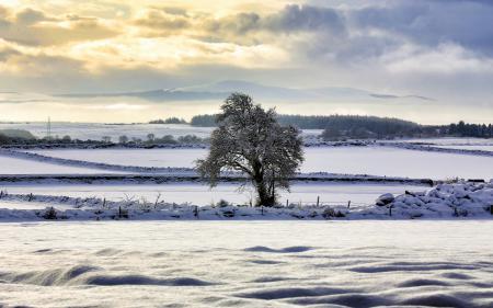 Фотографии зима, поле, дерево, пейзаж