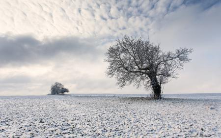 Фото поле, дерево, зима, пейзаж
