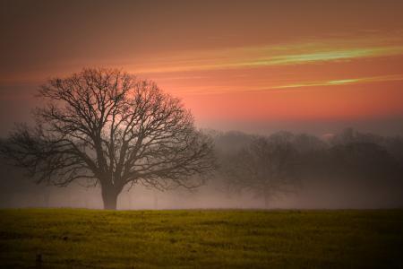 Фотографии небо, закат, поле, деревео