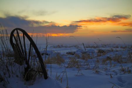 Фото зима, поле, трава, закат