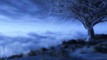 Фото дерево, небо, звёзды, сумерки