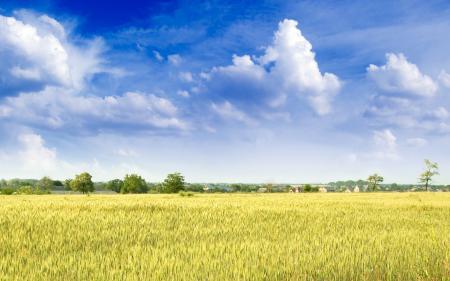 Заставки поле, дома, небо