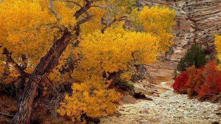 Картинки осень, день, деревья, листочки