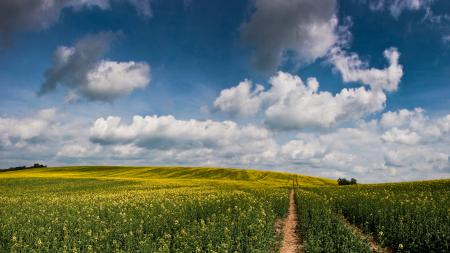 Заставки природа, поле, травы, цветы