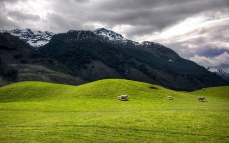 Обои горы, холмы, животные, природа