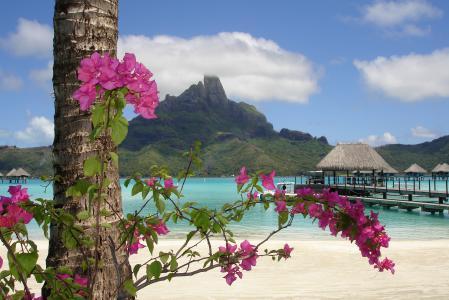 Заставки море, берег, цветок, лето