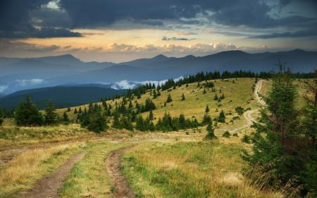 Фотографии дорога, трава, хвойные деревья, горы
