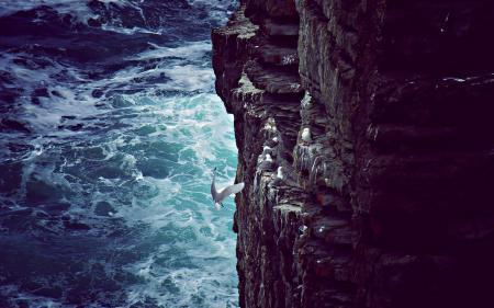 Фото чайки, скала, море, волны