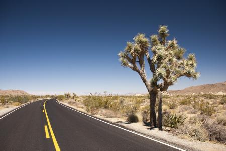 Фотографии пустыня, дорога, дикая Америка