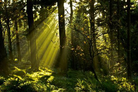 Обои лес, деревья, трава, ветки