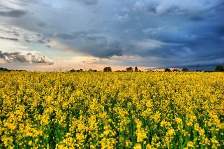 Фото Поле, цветы, небо