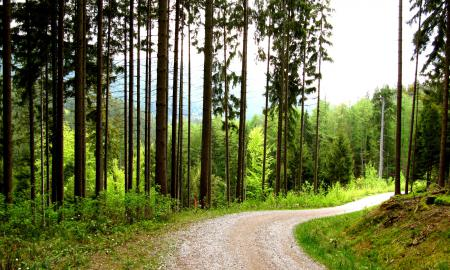 Фото дорога, поворот, лесная, деревья