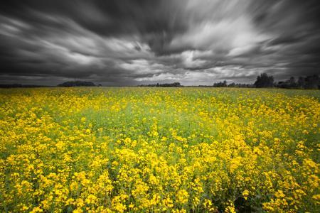 Фото небо, серые тучки, поле, рапс