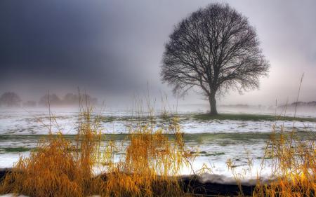 Обои поле, дерево, снег, трава