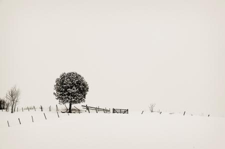 Заставки монотонность, зима, минимализм, дерево