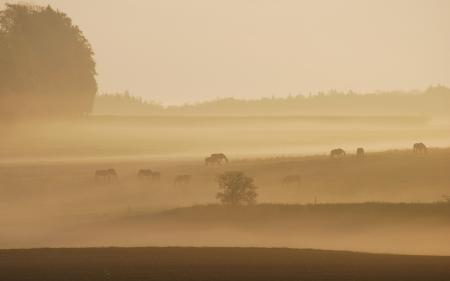 Обои утро, туман, поле, кони