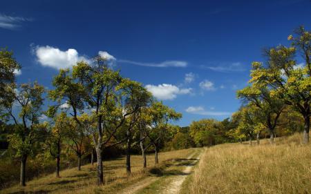 Обои дорога, лето, небо, деревья