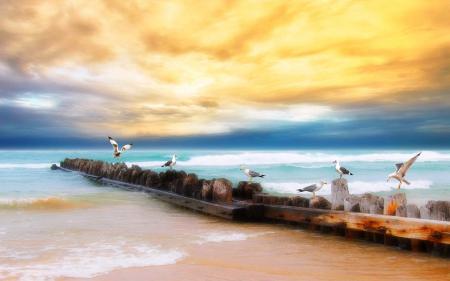 Фото море, чайки, небо, hdr