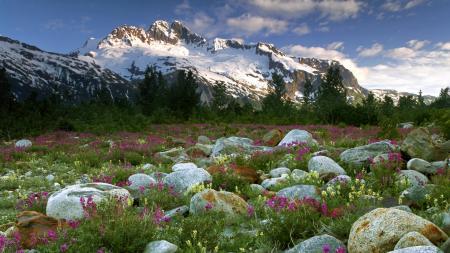 Фото горы, лес, камни, цветы