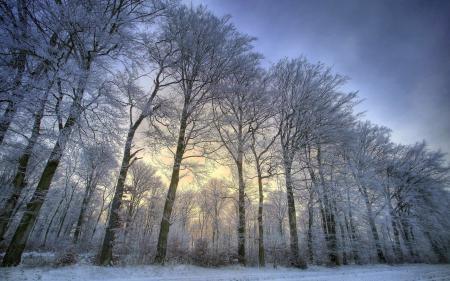 Фото зима, деревья, снег, пейзаж