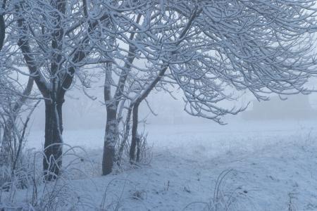 Картинки снег, зима, трава, деревья
