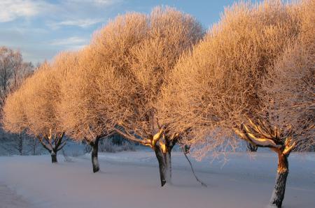 Заставки зима, деревья, снег, закат