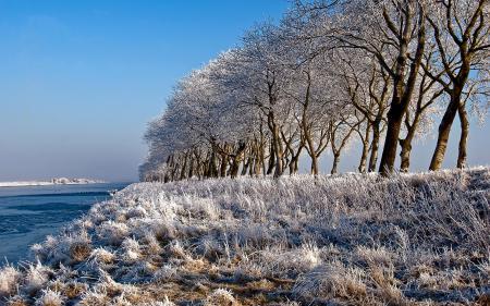 Картинки зима, снег, деревья