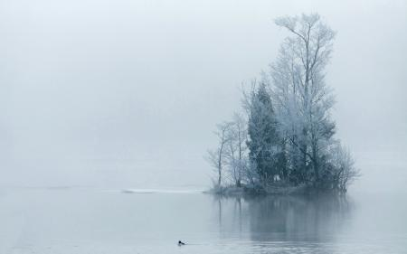 Фотографии озеро, деревья, туман, утро