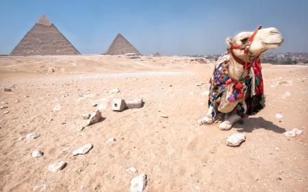 Фотографии верблюд, пирамиды, египет