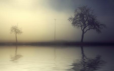 Фотографии утро, туман, деревья, пейзаж