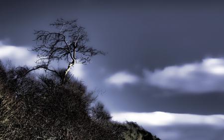 Фото дерево, небо, пейзаж