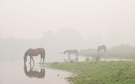 Фото Туман, вода, лошади
