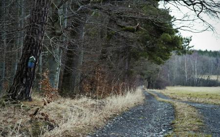 Фото дорога, поле, деревья