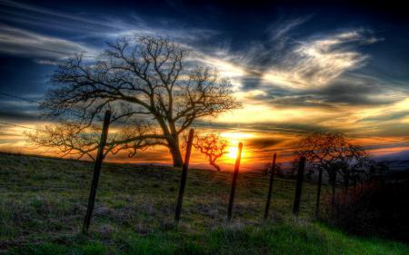 Обои закат, лето, дерево, забор
