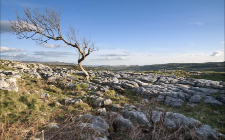 Фото дерево, поле, камни, пейзаж