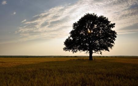 Обои поле, дерево, пейзаж